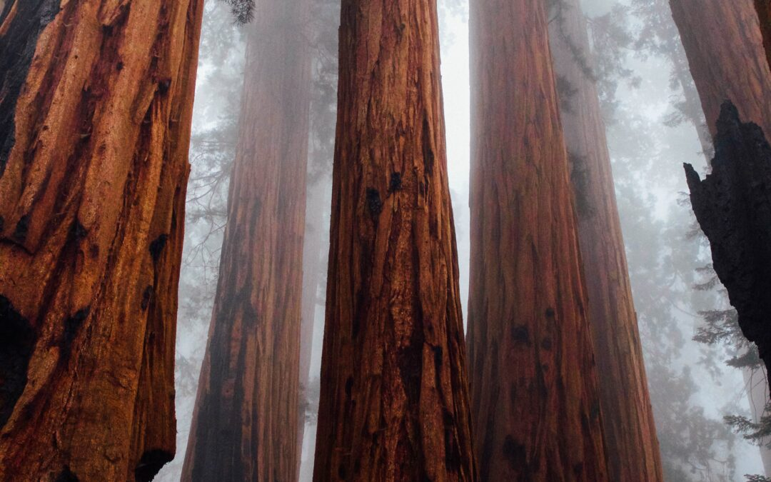 Dad, Mom, Dr. Packer, Sequoias, and Knowing the God Who Is